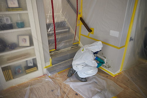 professional mold remediation technician at work