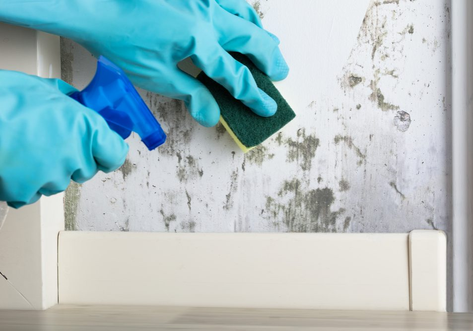 gloved hand removing mold from wall